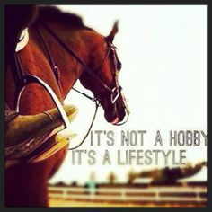 #horses #lifestyle #equestrian
