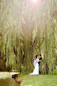 I would love there to be weeping willow trees at our reception.  I love them!