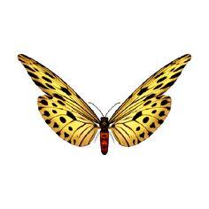 Blog de l'ile de kahlan - tubes papillons - found on Polyvore
