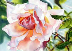 Garden rose by Marney Ward