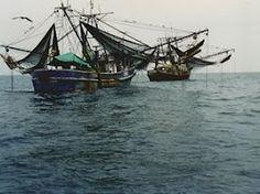 anchored shrimp boats