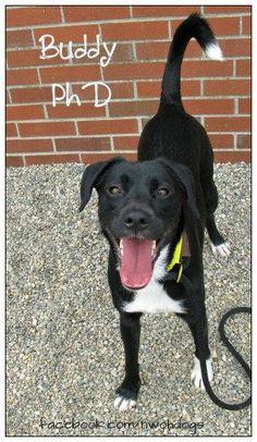 Lucas County Dog Warden 410 S Erie Toledo, OH  419-213-2800