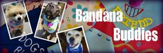 helping rescue dogs find families. . . donate bandanas to help them