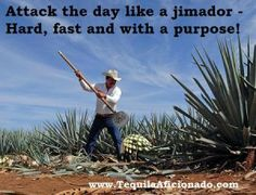 Attack the day like a jimador - hard, fast, and with a purpose! tequila meme