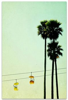 Boardwalk Palms Print