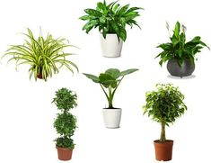 Best 10 Air Purifying Plants | We previously talked about air purifying indoor plants. We want to ...