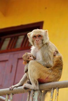 Monkey Temple - Mandalay, Burma