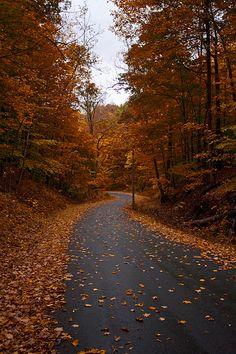 A lovely seasonal road covered in leaves near Skaneateles Lake, upstate New York