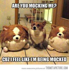 Are you mocking me?