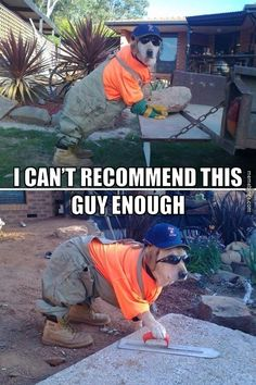 Handyman dog working around the house