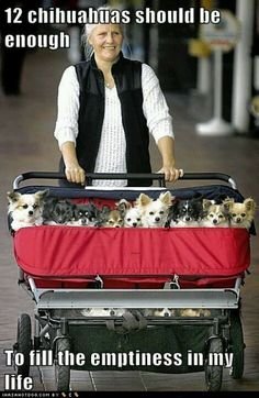 12 chihuahuas should be enough to till the emptiness in my life ☺