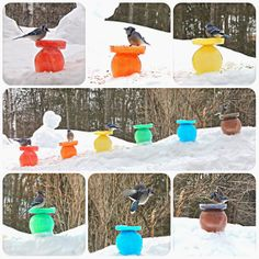 Twig and Toadstool: Feeding Our Feathered Friends: Rainbow Ice Bird Feeders