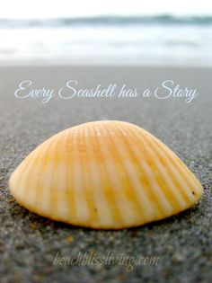 Seashell Quote. Every seashell has a story. Capture your story: http://beachblissliving.com/how-to-make-seashell-jewelry/