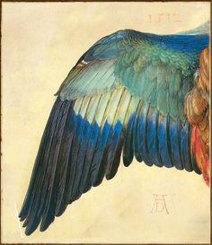 Wing of a European Roller, Albrecht Dürer, 1512 gouach, bird, rollers, 1512, dürer wing, albrecht dürer, art, inspir, european roller