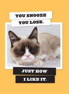 Meet Grumpy Cat on her book tour this summer. Actually don't.
