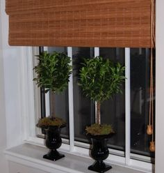 mini topiaries in mini urns kitchen windows, diy topiari, mini urn, mini topiari