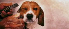 Amazing, Life-Like Portrait Of A Beagle Made Entirely Of Candy Sprinkles - DesignTAXI.com