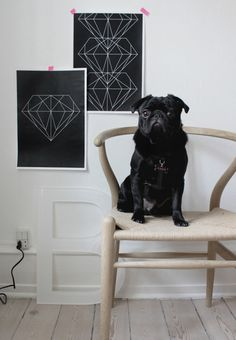 Dogs and design <3 // Hans Wegner Wishbone Chair #dogs #design