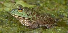 Swamp Animals and Plants   Wetland Plants and Animals - Bing Images