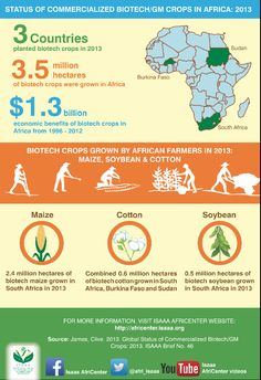 Africa GMO progress