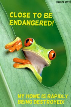 Don't let my page icon become endangered! Save the rainforest, to be endangered, is one step closer to extinction! - Wildlife Earth.