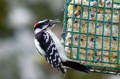 Readers share their best suet recipe for saving money feeding birds.