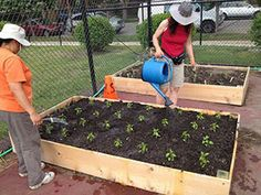 Peterson Grow to Give beds: Five percent of food produced on each of the community gardens is given to area organizations for distribution. ...
