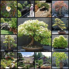 The Bonsai Garden at The North Carolina State Arboretum, Asheville | Flickr – Compartilhamento de fotos!