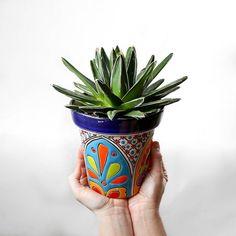 love agave