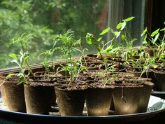 Once you learn how to germinate seeds, you will always be able to have cheap plants. It is easy to get started with cheap seed starting. Look at how to germinate seeds in this article.