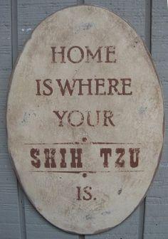 ♥ Shih tzu