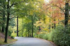 Biltmore's Approach Road is looking lovely this week. Fall is here in the Blue Ridge Mountains.