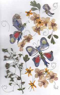 pressed flower butterflies