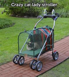 Now I know what to do with Kenny's stroller when he outgrows it!