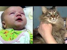 'Hero' Cat Masha Sav