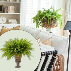 Pretty plants, like this Boston fern, in a rustic wire-frame urn, bring the outdoors in. Urn, about $25 from save-on-crafts.com   Photo: John Gruen; (inset) Wendell T. Webber   thisoldhouse.com