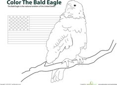 Color the Bald Eagle | Education.com
