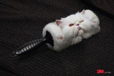 3M Lint Roller: Cat. kkkk nais ou menos assim que deveria ser! Por isso ñ tenho animais de estimaçao! Mas agora... vou pensar! rs Grande montagem!