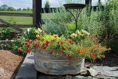 #uncommon & #contest  The garden garden junk, flower planters, gardens, garden thing, garden idea, flowers