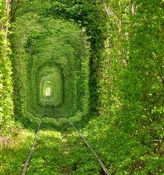 Ukraine tree tunnel
