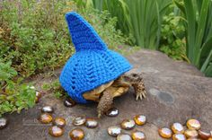 Shark fin tortoise cozy - made to order in any color on Etsy, $18.00
