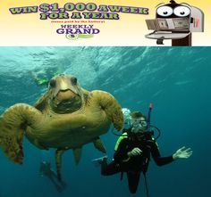 Week 23: For $1,000 you could snorkel the Great Barrier Reef with this friendly fellow!