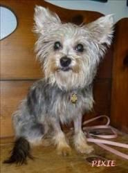 Small Adoptable Dogs In Louisville Ky
