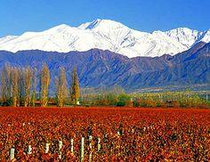 Mendoza- Argentine
