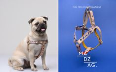 Bauhaus-Inspired Dog Collars & Leashes by MADZAG - Dog Milk