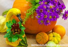 Turn gourds and pumpkins into cute fall planters! #pumpkins #gourds
