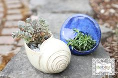 the hobby room: Re-potting Succulents