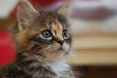 Portrait of a Kitten (by Terry on Flickr)