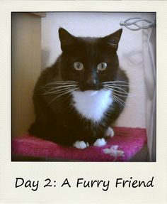Library Girl Reads & Reviews: A Furry Friend #BlogFlash2012 Day 2