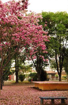 Ipatinga, MG, Brasil